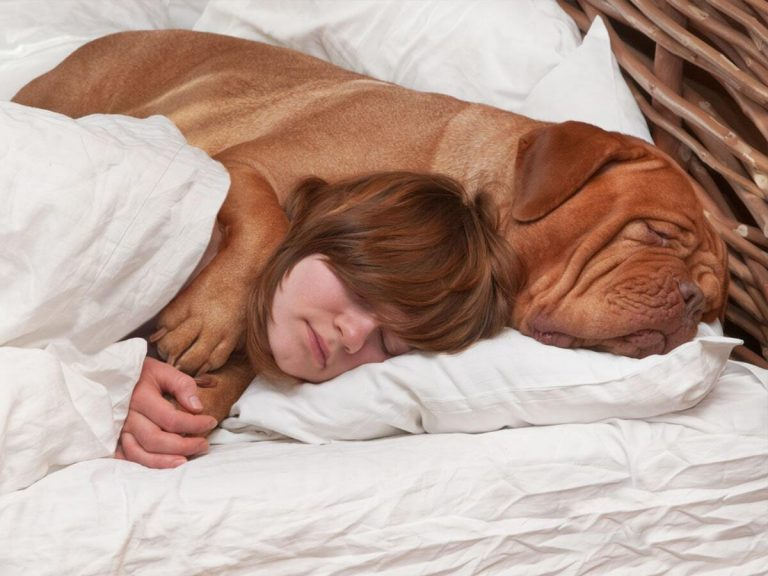 How Collagen and Hyaluronic Acid Keep Dogs' Skin Moisturized and Prevent Skin Irritation