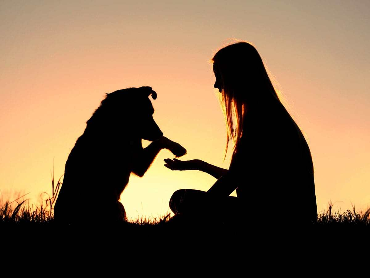 How To Keep Your Dog Joints Healthy, Benefit Of Collagen And MSM