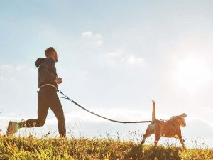 Role of your dog's immune system and how to support it