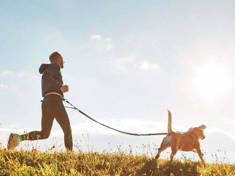 Ruolo del sistema immunitario e come supportare quello dei nostri cani