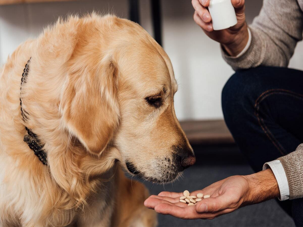 Why liquid collagen supplements are better for dogs than pills and powders-min
